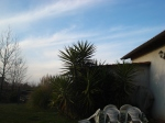 Olive Tree Hill