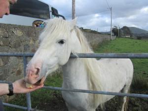 irelandengland2012 916