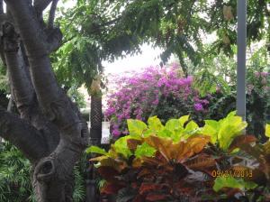hawaii2013 403
