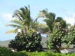 hawaii2013 405