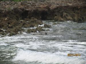 hawaii2013 426