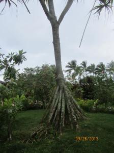hawaiidisk22013 010