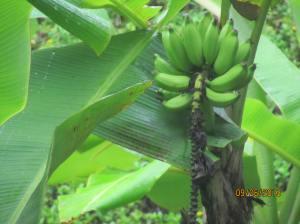 hawaiidisk22013 015