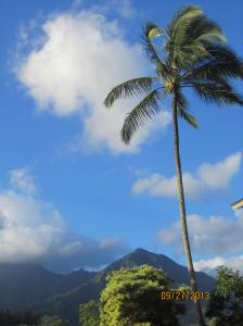 hawaiidisk22013 101