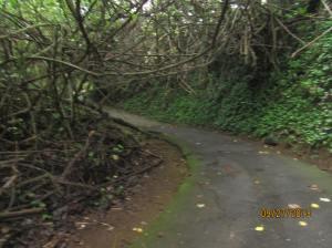hawaiidisk22013 144